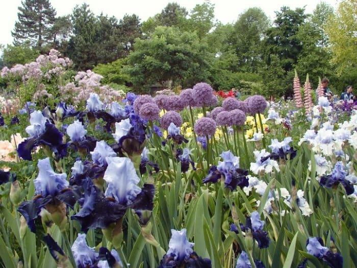Schreiner's Iris Flower Garden, Salem, Orlando